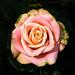 BK287 Pink Rose