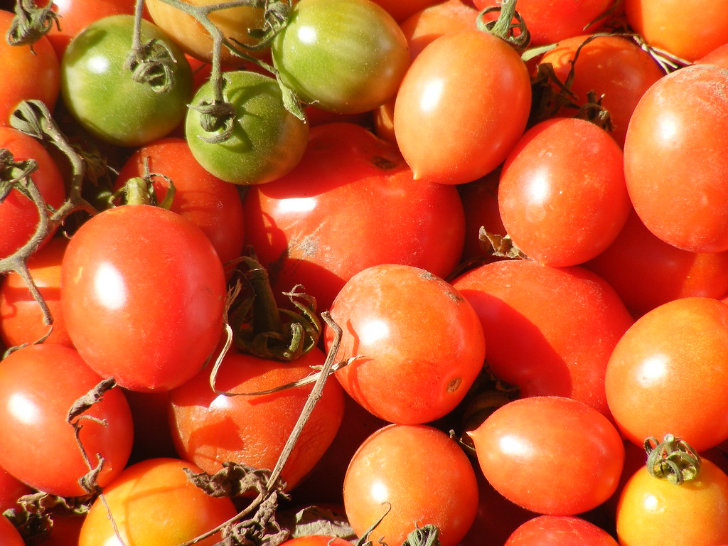 Image Result For How Many Tomatoes