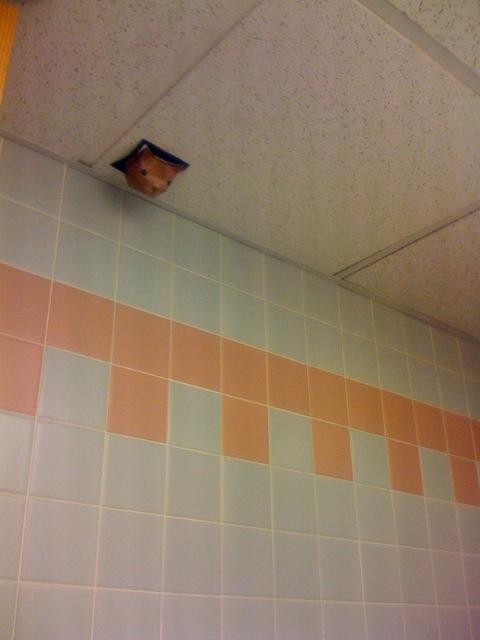 Cat ceiling masturbate