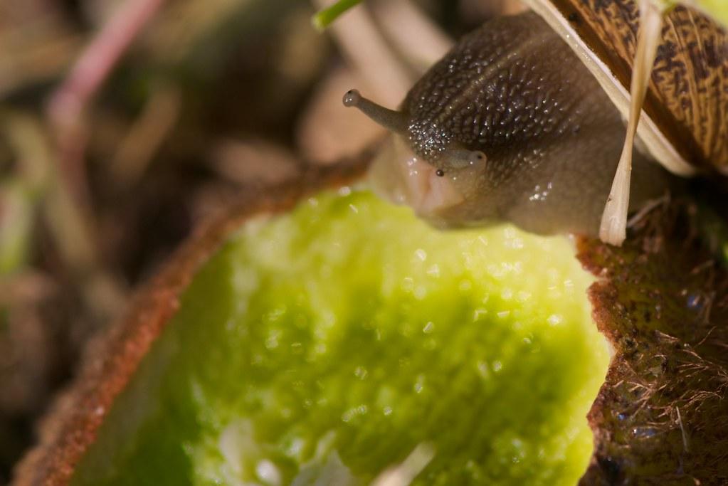 les escargots aussi ont droit aux bienfaits de la vitamine flickr. Black Bedroom Furniture Sets. Home Design Ideas