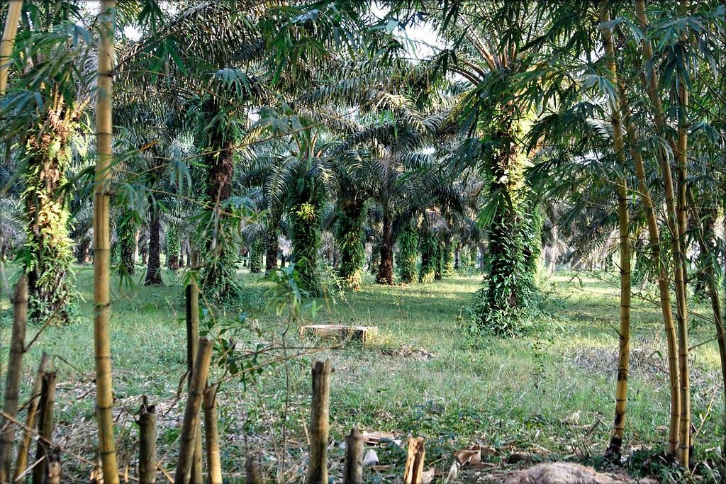 La palmeraie de bingerville au jardin botanique for Bingerville jardin botanique