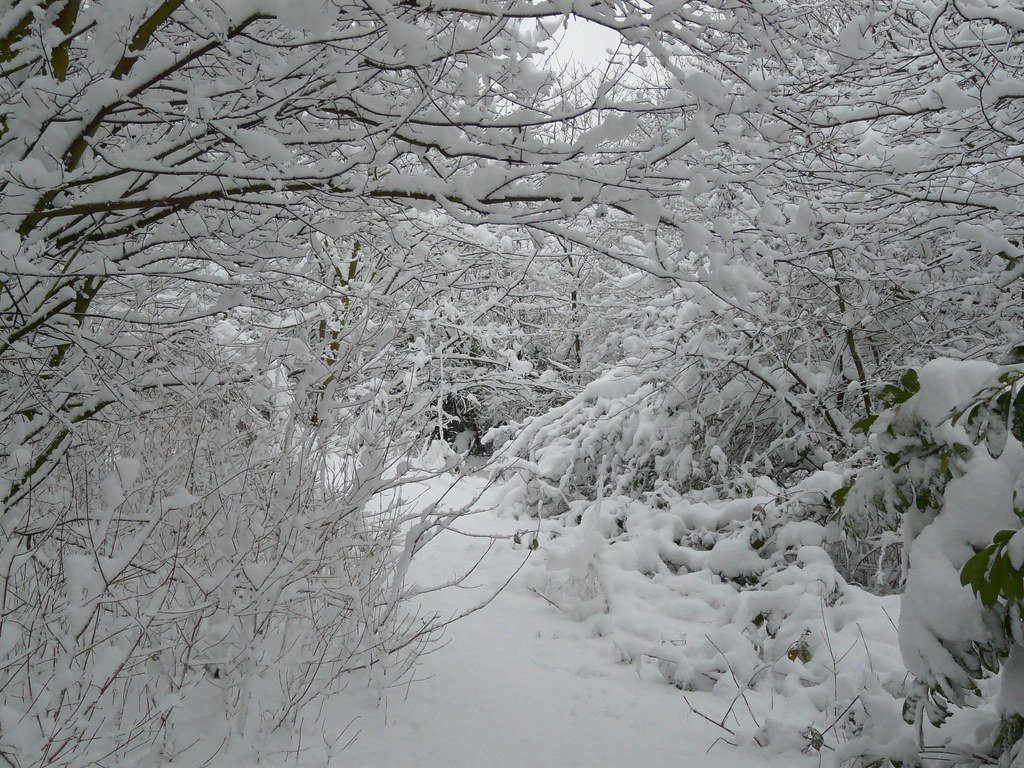 Snow In Russia Dock Woodland Mike Scott Flickr