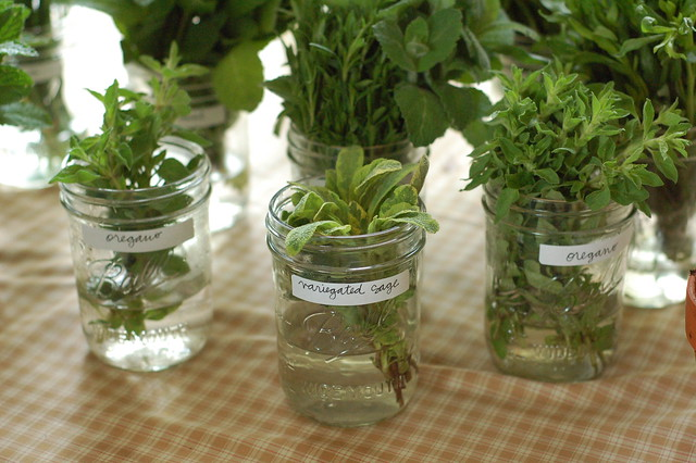 jars of herbs