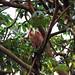 Platypus bird