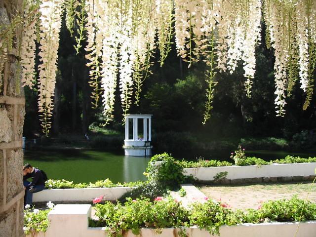 Flor de la pluma casona laguna linneo jard n bot nico - La casona del jardin ...