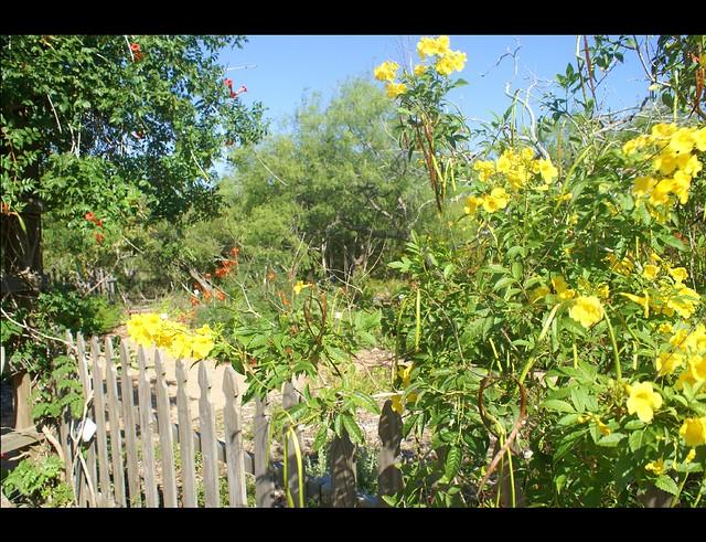 South Texas Botanical Garden The Humming Bird Garden At Th Flickr