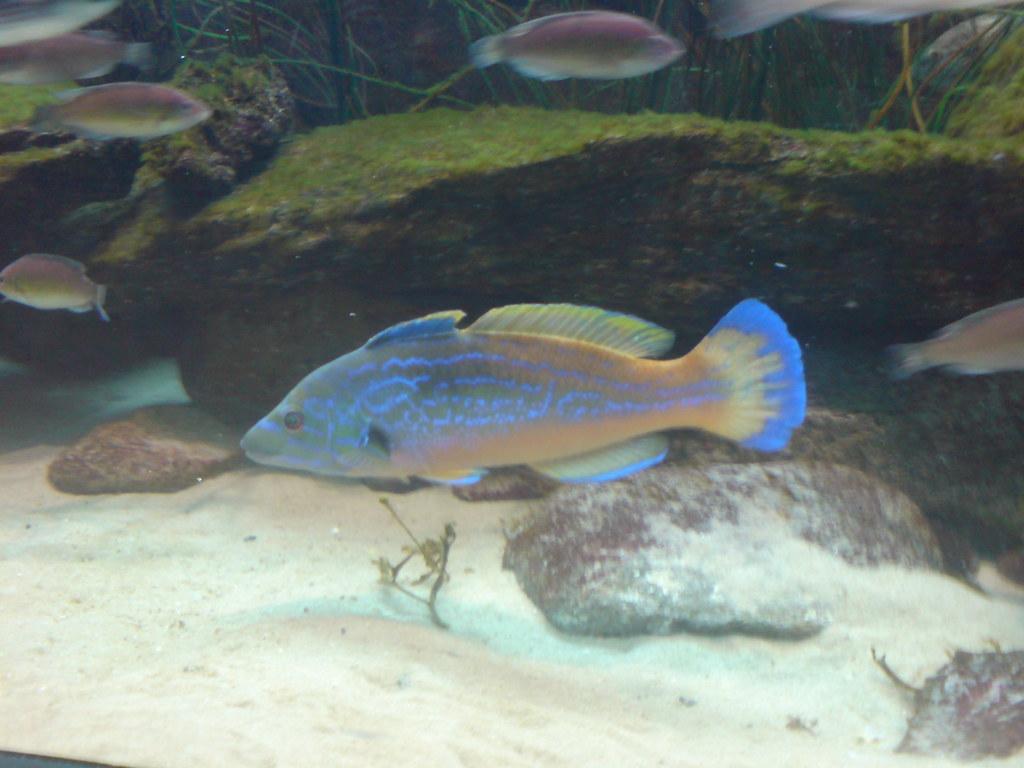 Plymouth Aquarium Ben Parker Flickr