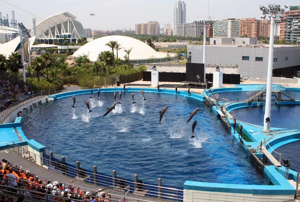 Dolphin show at l 39 oceanografic valencia spain not for Oceanografic valencia
