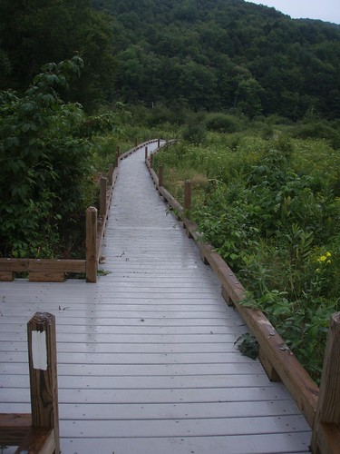 Thundering Falls boardwalk | by Rebecca Sudduth