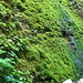 Water dripping in moss, Fern Canyon
