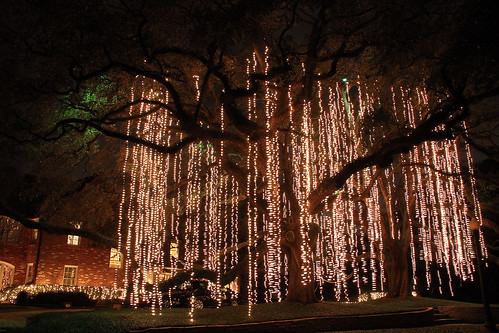 Christmas light spanish moss flickr photo sharing for How to hang string lights on trees