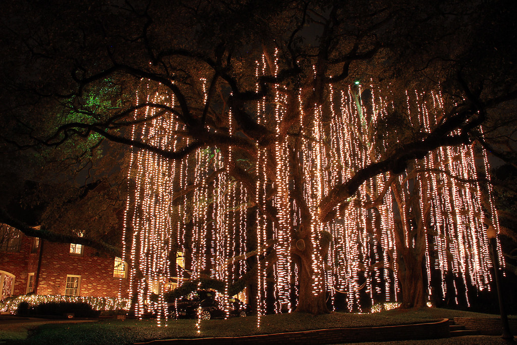 How To String Lights On A Tall Tree : Christmas light Spanish Moss Christmas lights hanging like? Flickr
