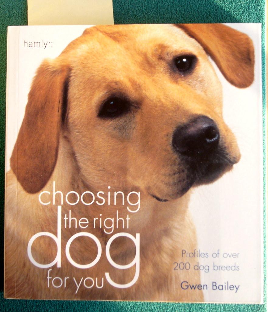 Gwen Bailey The Rescue Dog