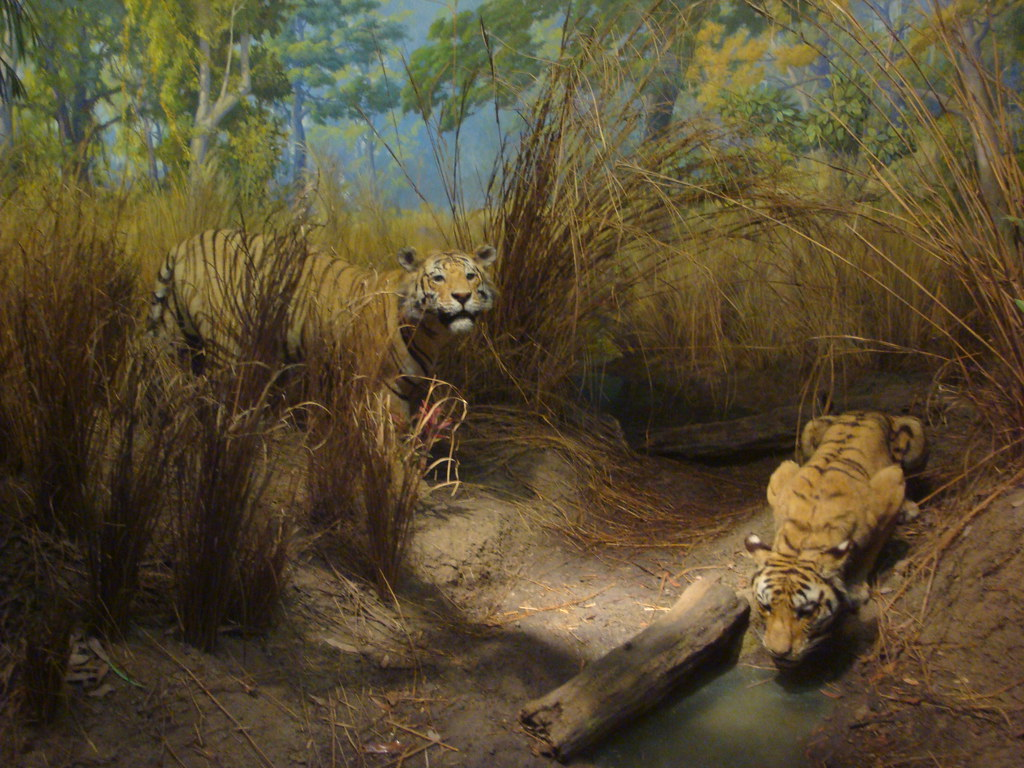 American History Of Natural History