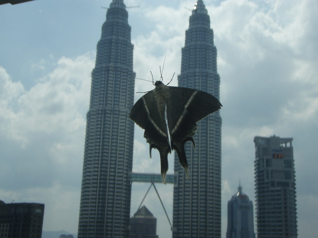 Free Room Giant Moth Attacks Petronas Twin Towers A Moth On Our