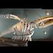 three whales [Orca skeleton]