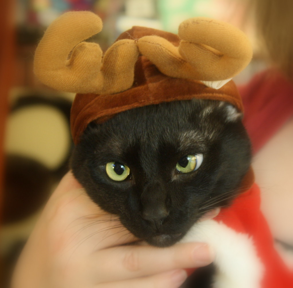 Pathetic Cat with Antlers | Happy Cat in Reindeer Antlers | Flickr