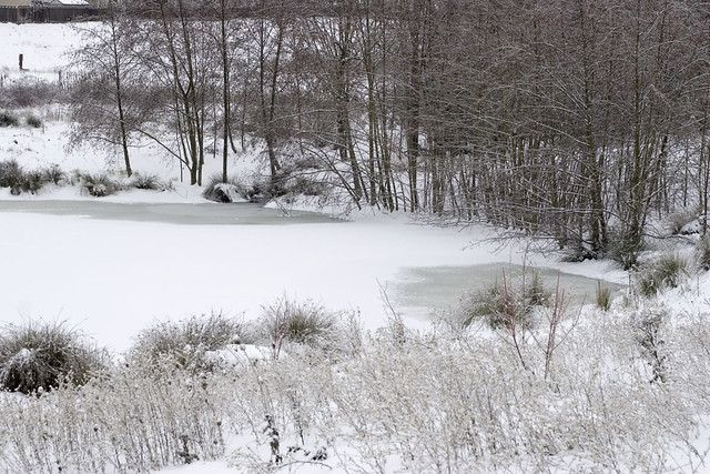 Winter wonder land frozen plants and frozen pond for Winter pond plants