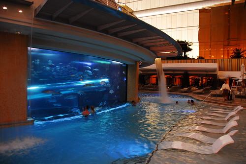 acquarium and pool slide at golden nugget | by LinksmanJD