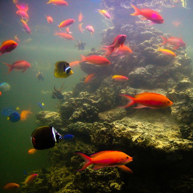 Bl190 New Jersey Aquarium Visit To The Camden Aquarium