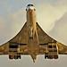 Metallic Concorde
