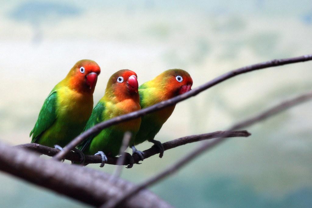 Image result for SAME BIRDS