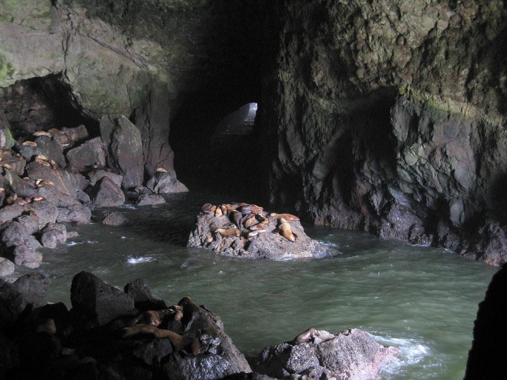 Sea Lion Caves | Paul Hamilton | Flickr