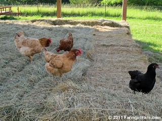 This year's hay inspectors | by Farmgirl Susan