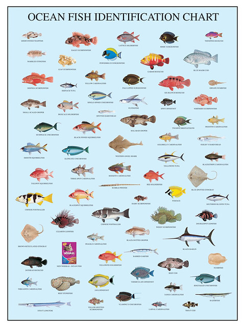 whiskas - ocean fish fish chart | basmoreu | Flickr
