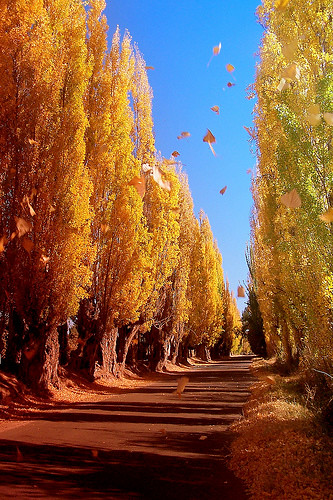 Tonada del oto o tonada del oto o music video no es lo for Arboles que no pierden sus hojas en otono