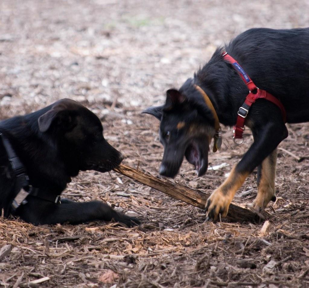 Chapel Hill Dog Park