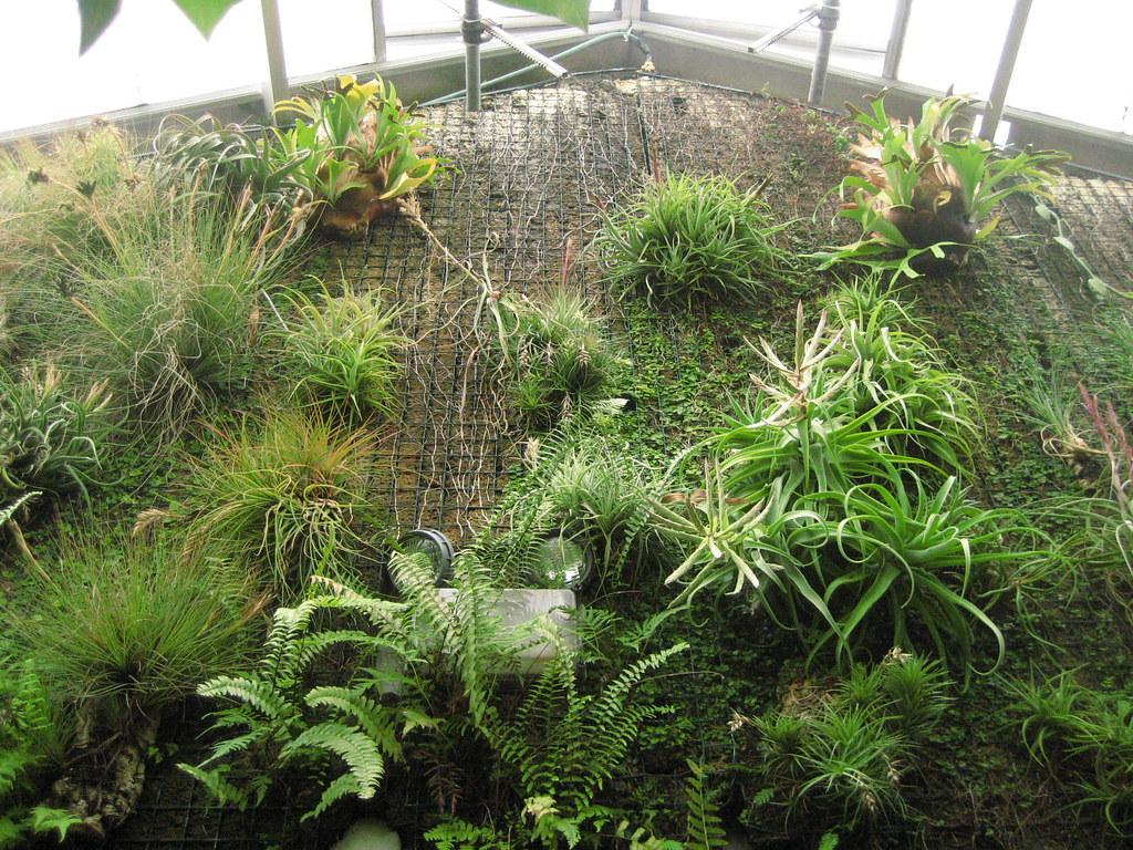 Img 8224 Baltimore Conservatory Botanical Gardens