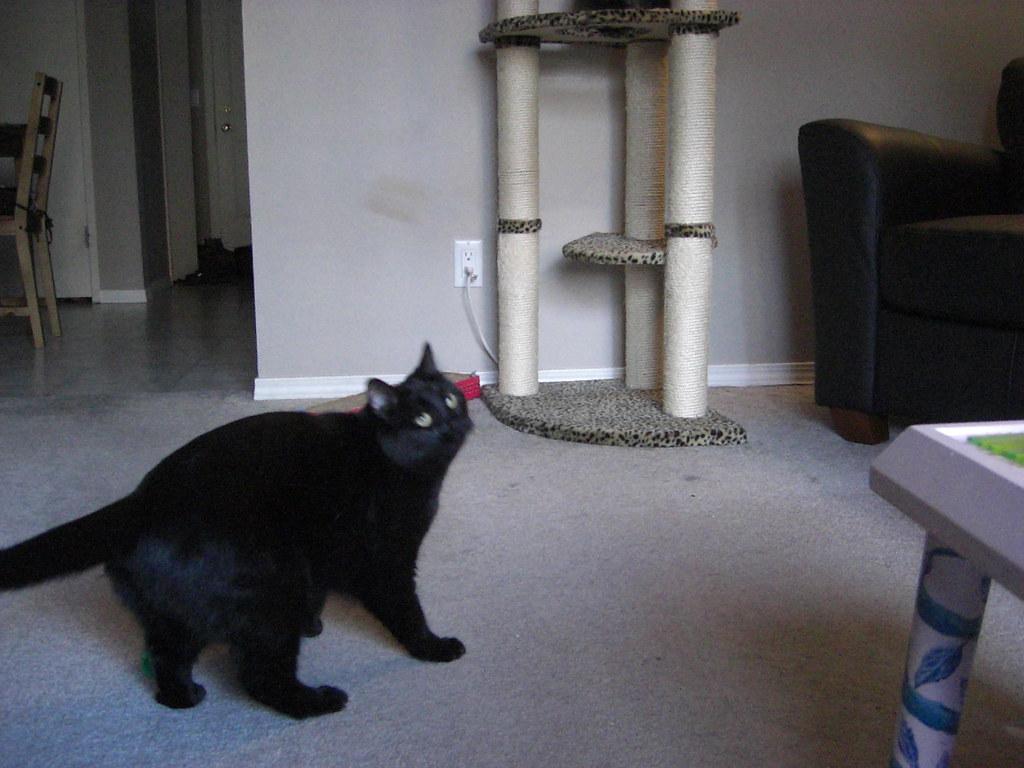 Cat C Trademark Trousers Grey Black