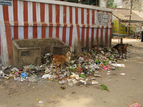 India - Sights & Culture - Common garbage dump outside a temple | by mckaysavage