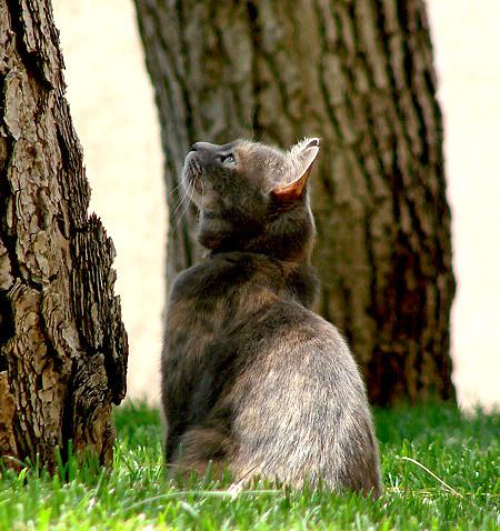 cat looking up a tree beckie flickr. Black Bedroom Furniture Sets. Home Design Ideas