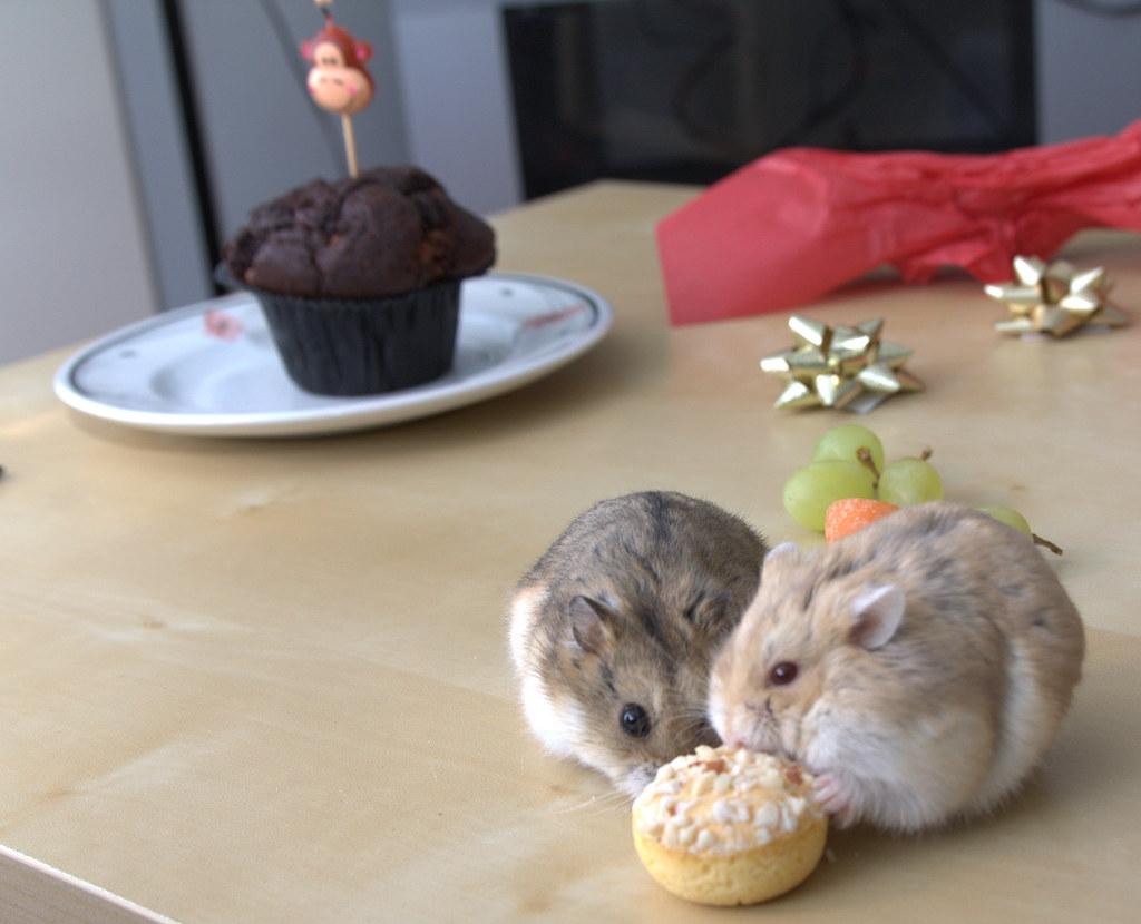 Hamsters First Birthday Cake Dan Derrett Flickr - Hamster birthday cake