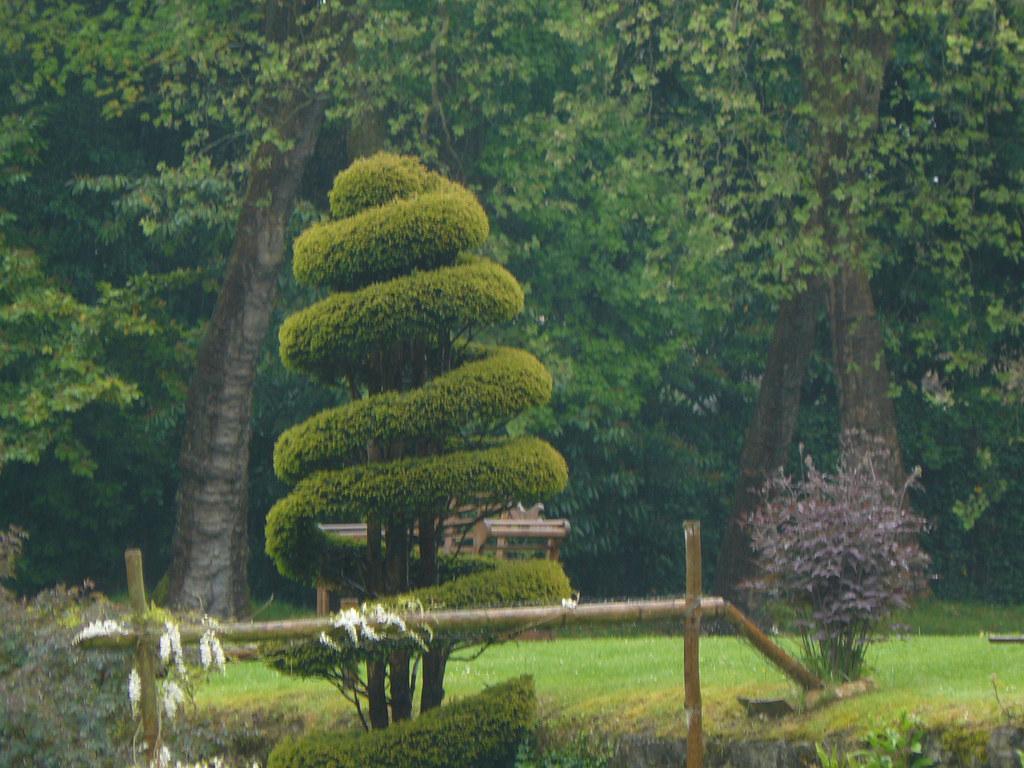Courances 91 topiaire dans le jardin japonais du ch tea - Jardin topiaire ...