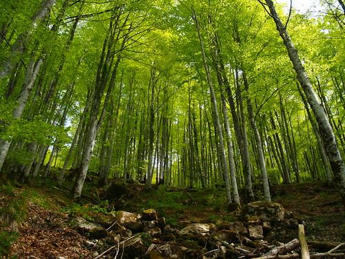 Selva de Irati   Una visita obligada   Sergio Molina   Flickr