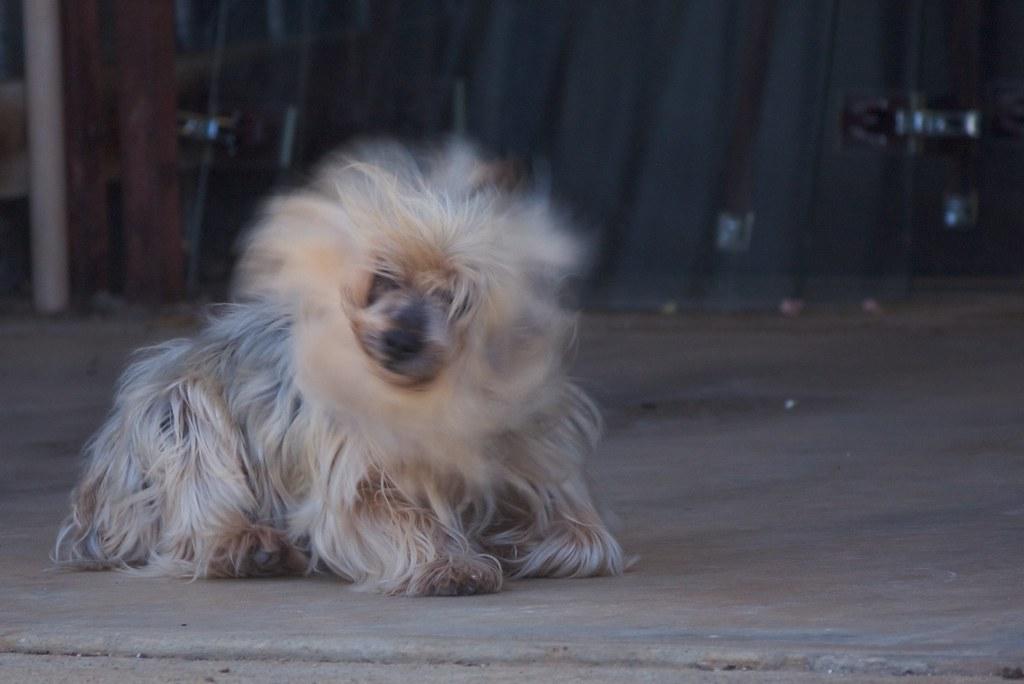 Dog Head Shaking Like Parkinson S