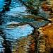 A Bluebird Flight In My Wild River…!!! :)