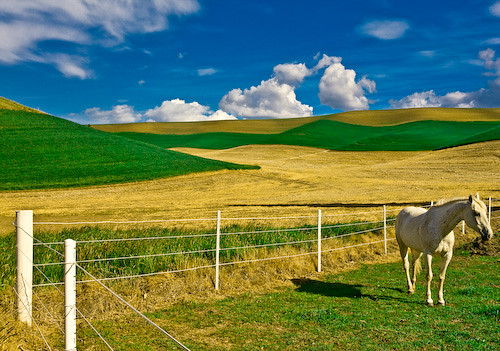 Palouse Horse | by skedonk