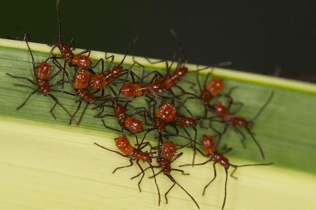 Tiny Red Bug Swarm Explore Bbum S Photos On Flickr Bbum H Flickr Photo Sharing