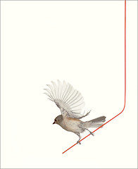 Gray / grey / Brown / Tufted titmouse / bird /  birds / on a red wire - / red / Brown /: tufted-02 | by Bahman Farzad