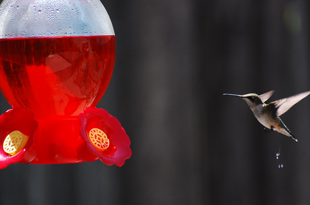 Where Well Be >> Humming Bird Peeing | Well I was just trying to get a shot o… | Flickr