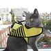 rumblebee2.jpg