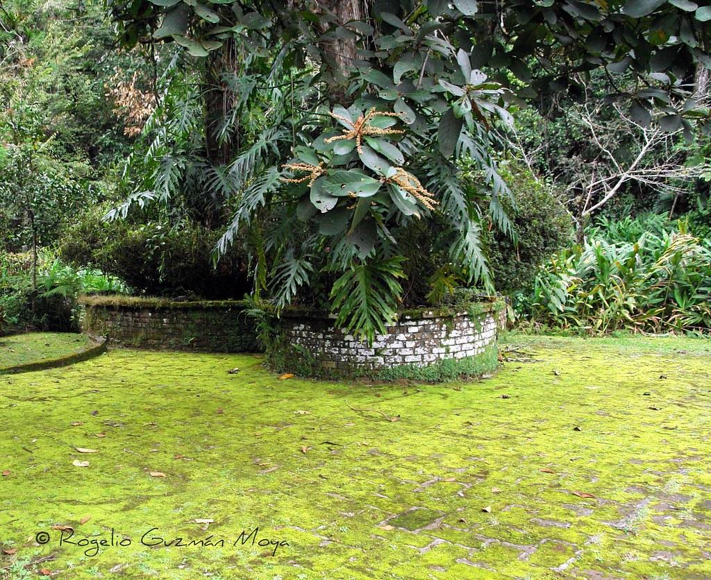 Rinc n en el jard n encantado arbol de aguacate avocado for El jardin encantado madrid