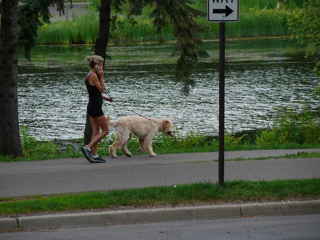 Dog Walking Minneapolis