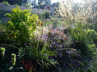 Late Summer Mixed Border | by RHR Horticulture