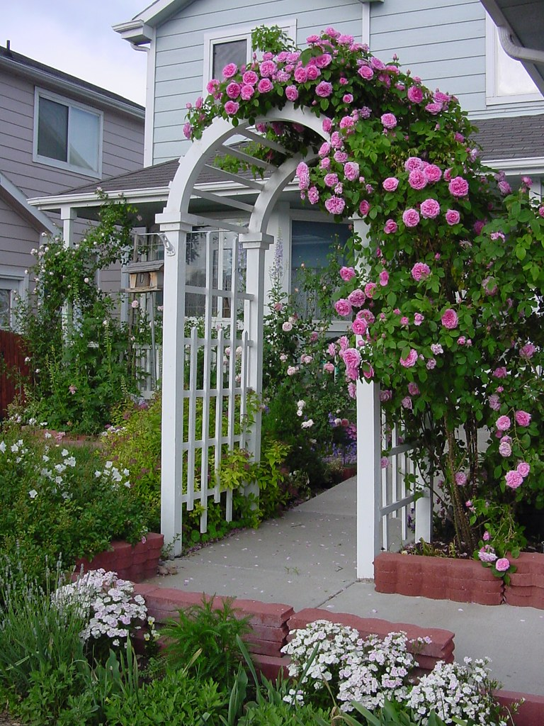 Rose Arbor Sadly I Have No Variety What Variety The