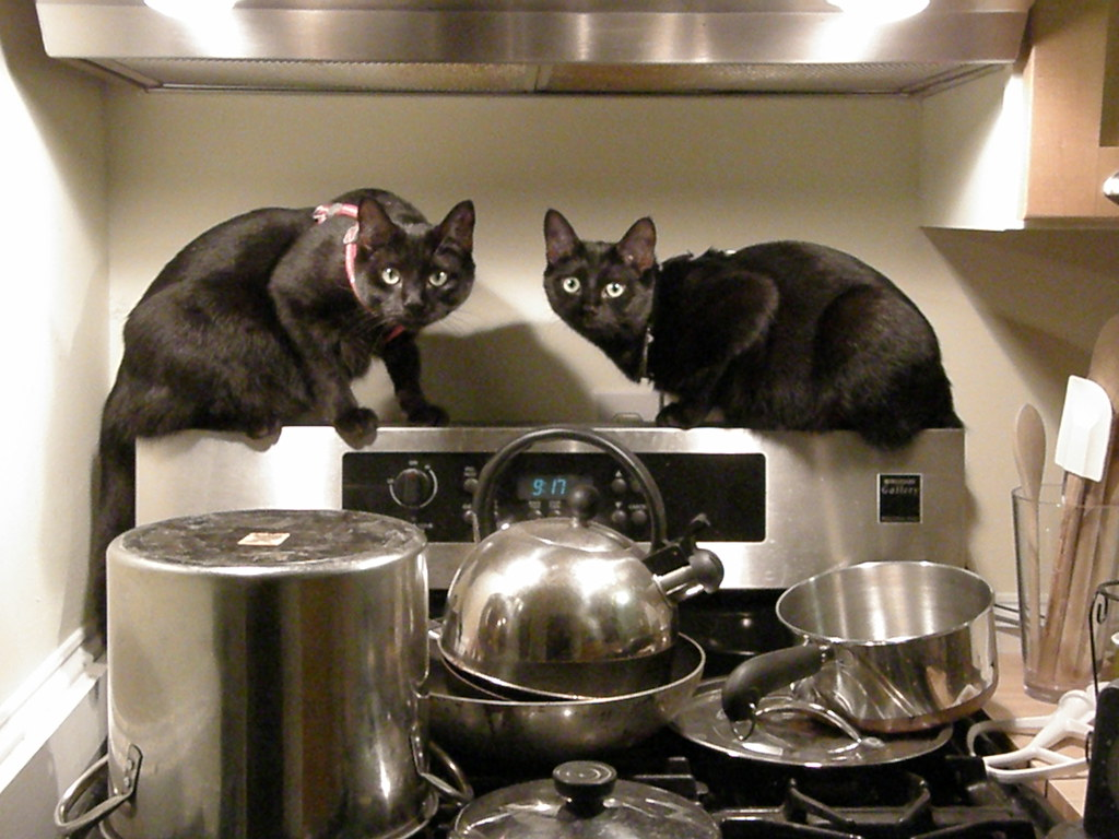 070907 cats cooking | ...